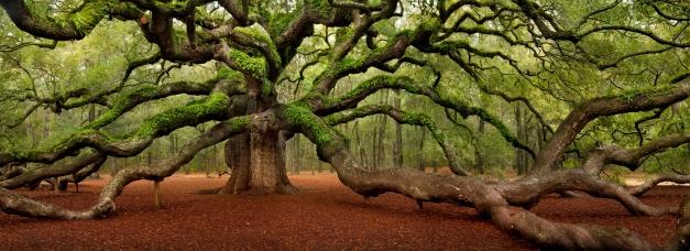 angel-oak-medium-web