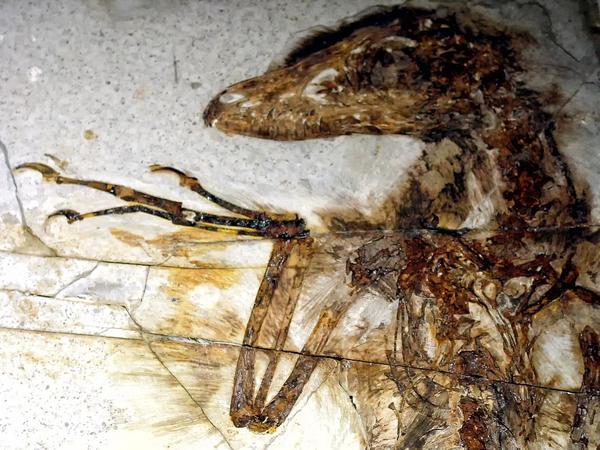 raptorwing_venomous_dinosaur_grande