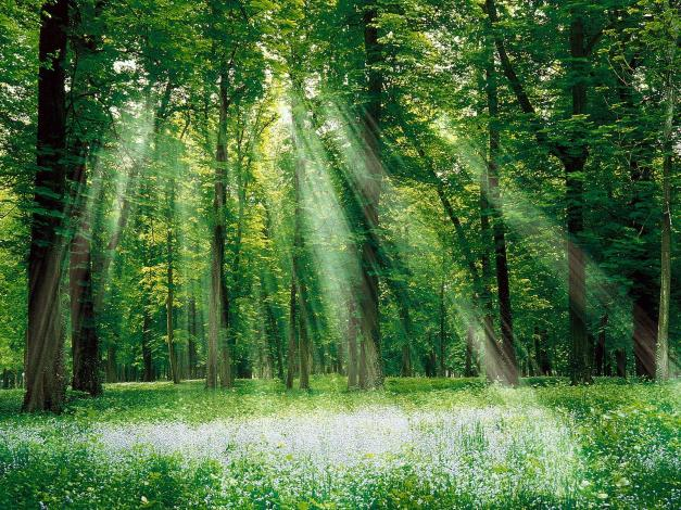 forest_sun_rays_trees_nature_hd-wallpaper-13202