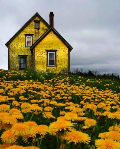 abandoned yellow house - madden vallis