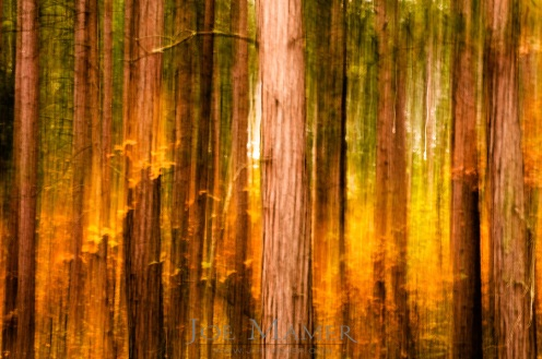 Chapel Pines Grove abstract